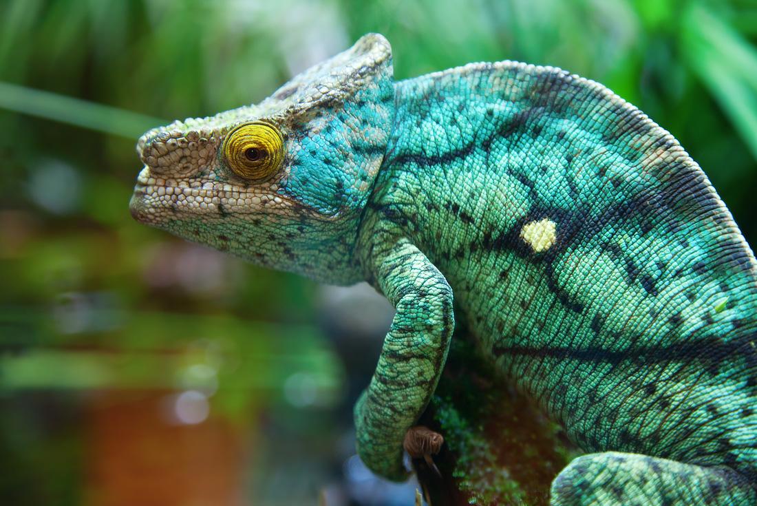Berenty Reserve Madagascar Experience: Independent 1
