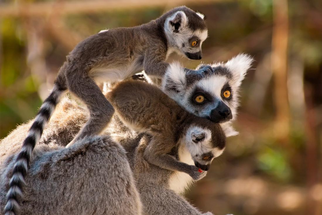 Berenty Reserve Madagascar Experience: Independent 3