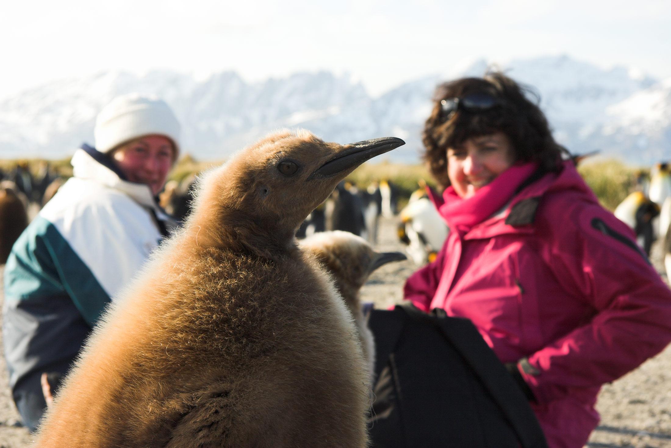 Discover Antarctica 11 days 2