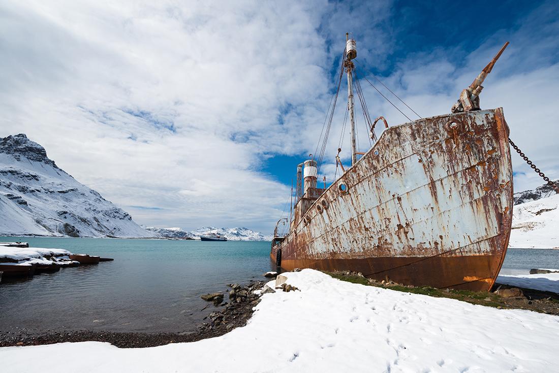 Antarctica, South Georgia and Falklands Odyssey 3