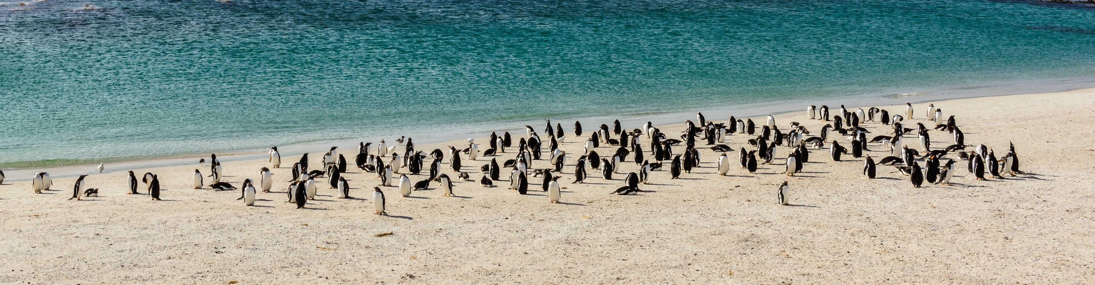 Falkland Islands Discovery