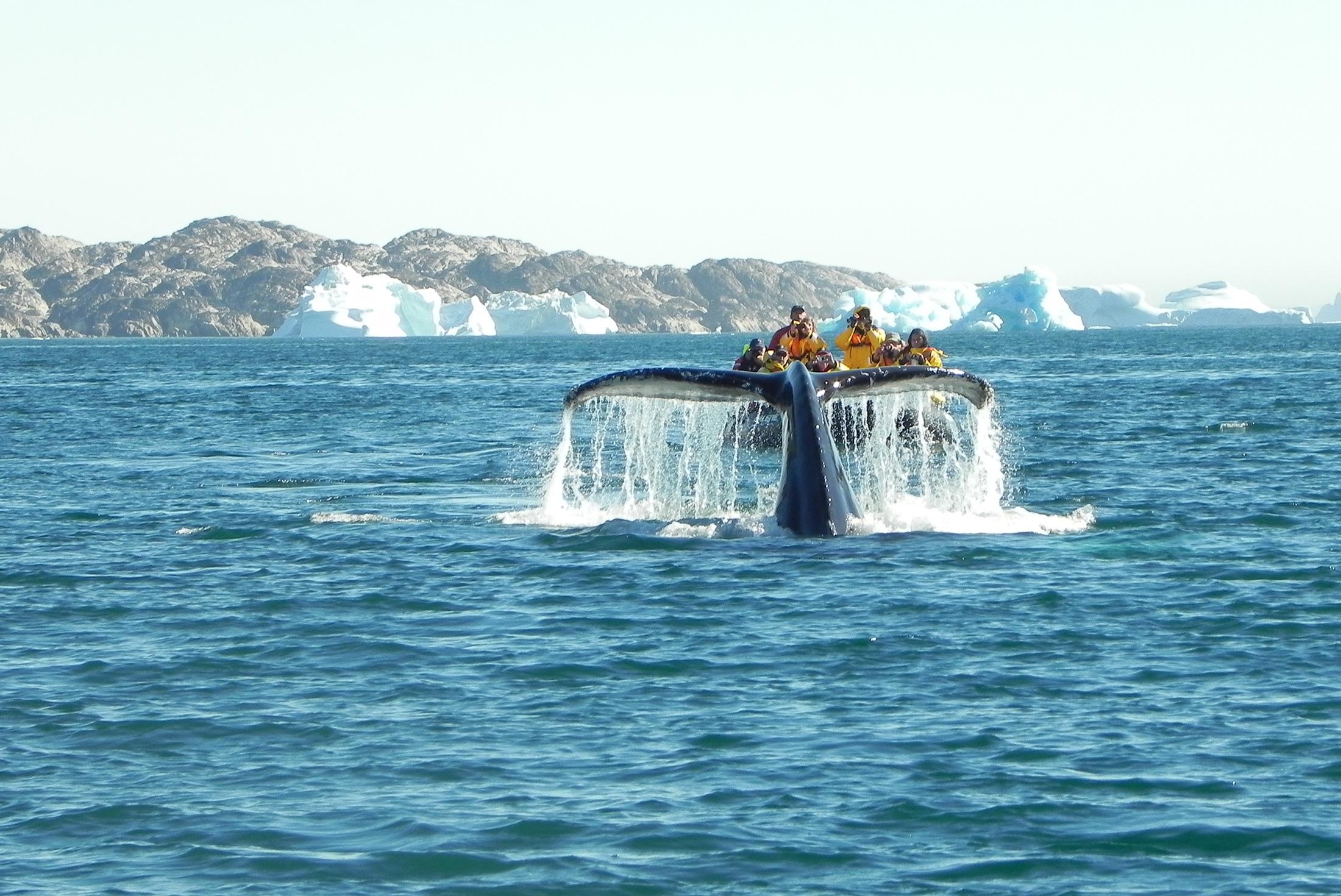 Spitsbergen, East Greenland and Iceland - Northbound 1