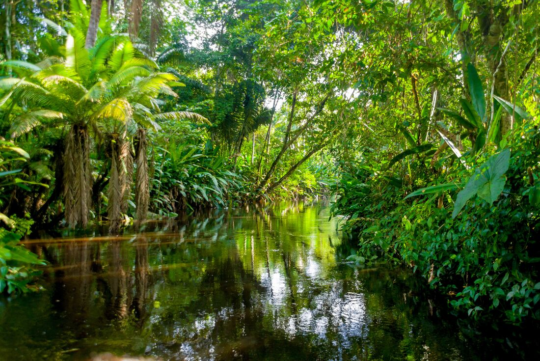 Ecuador: Amazon Jungle Experience – Independent 1