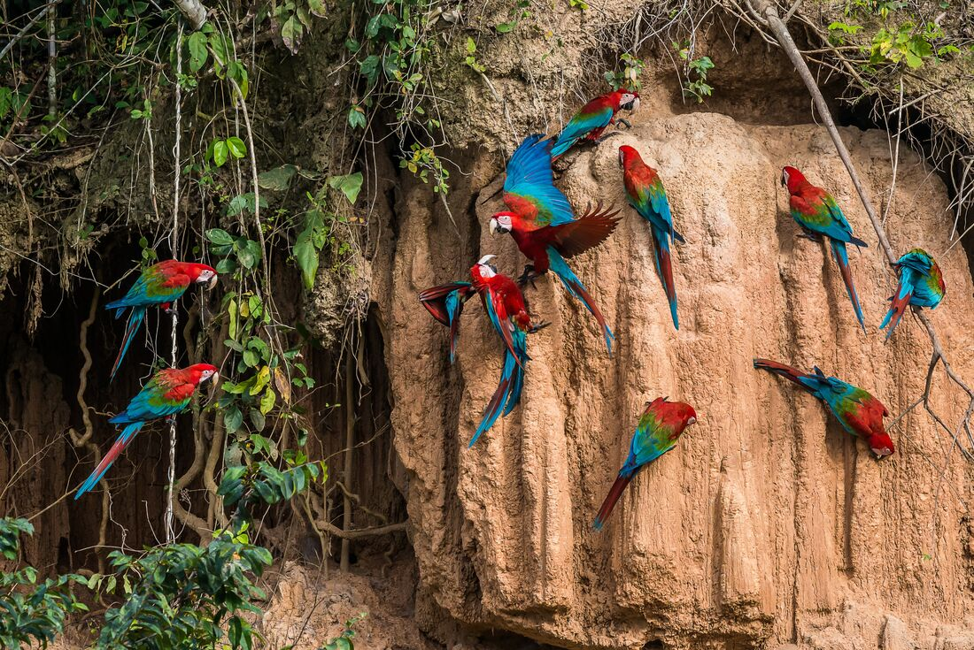 Ecuador: Amazon Jungle Experience – Independent 2