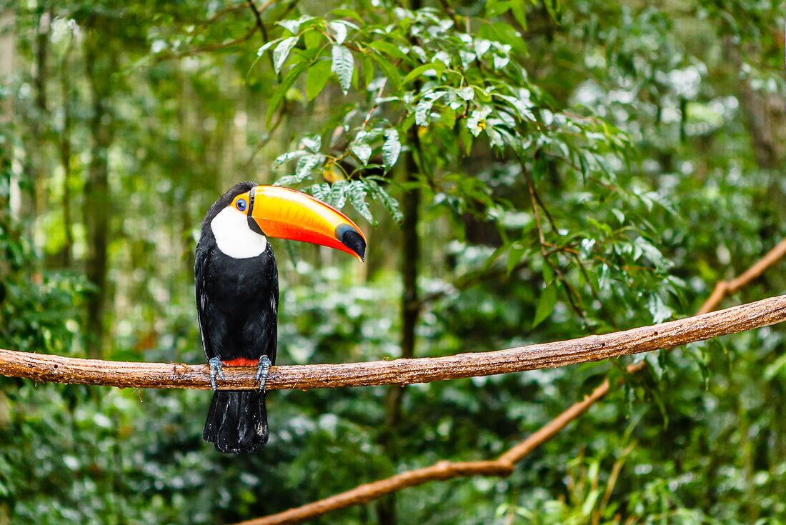 Ecuador: Amazon Jungle Experience – Independent 3