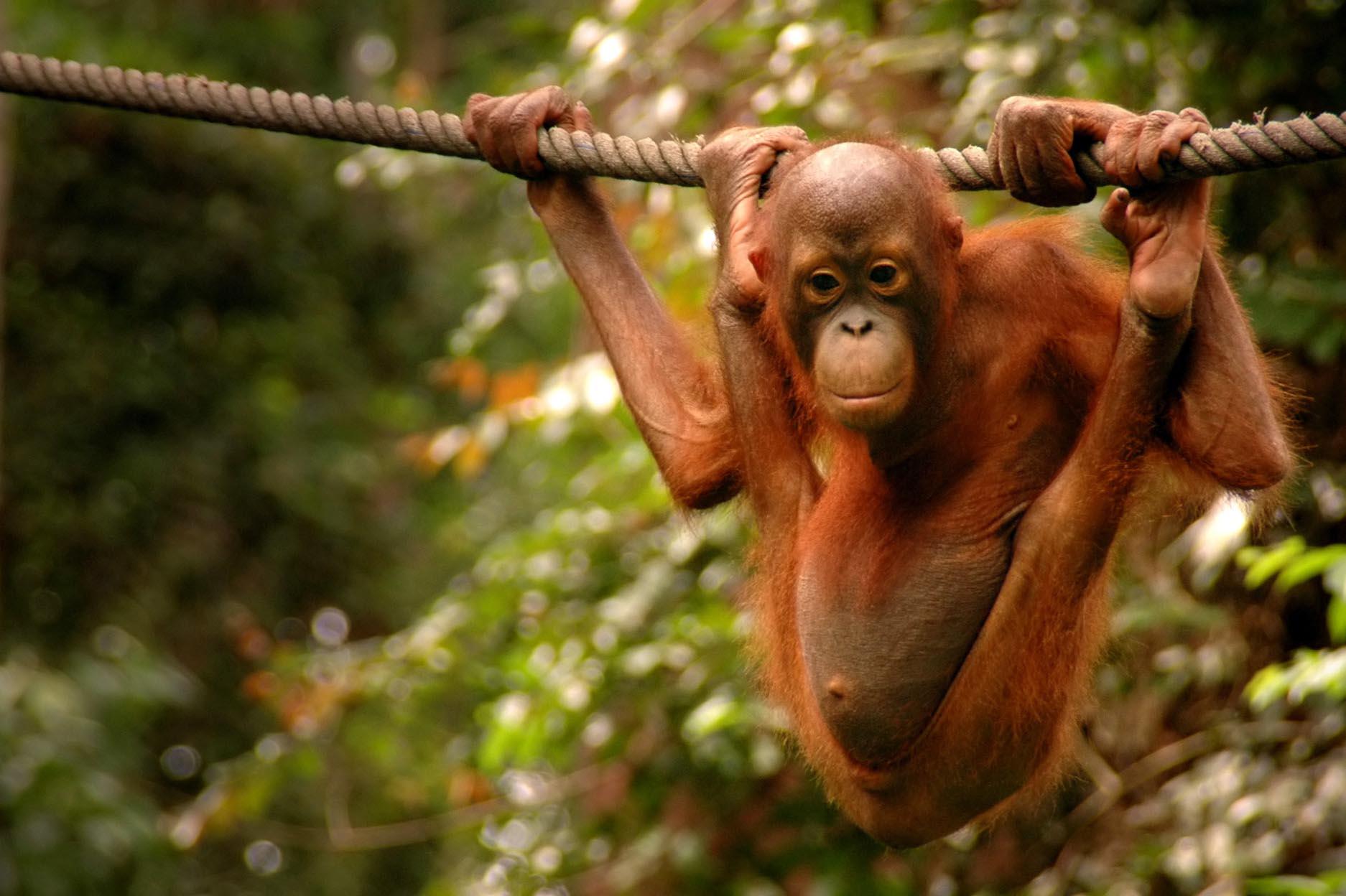 Borneo Adventure 1