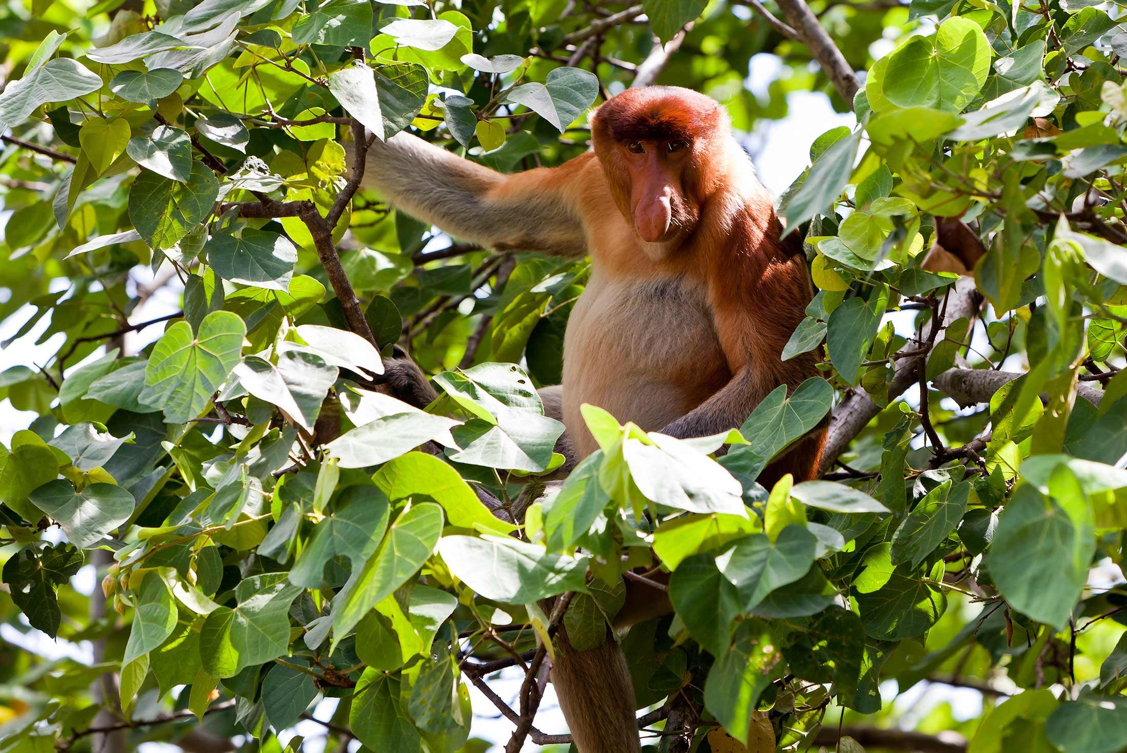 Borneo Adventure 2