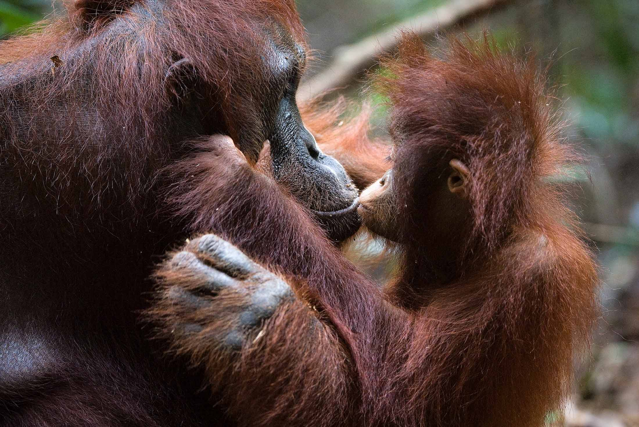 Borneo Adventure 3