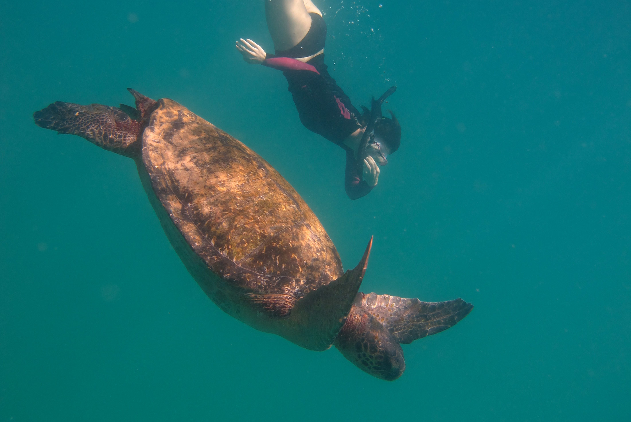 Galapagos Encounter: Central Islands  (Grand Queen Beatriz) 1