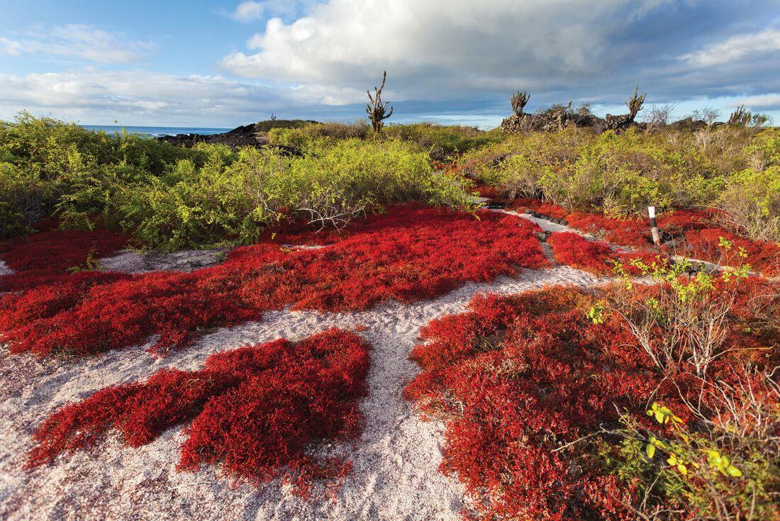 Treasures of the Galapagos: Western & Central Islands (Grand Queen Beatriz) 2