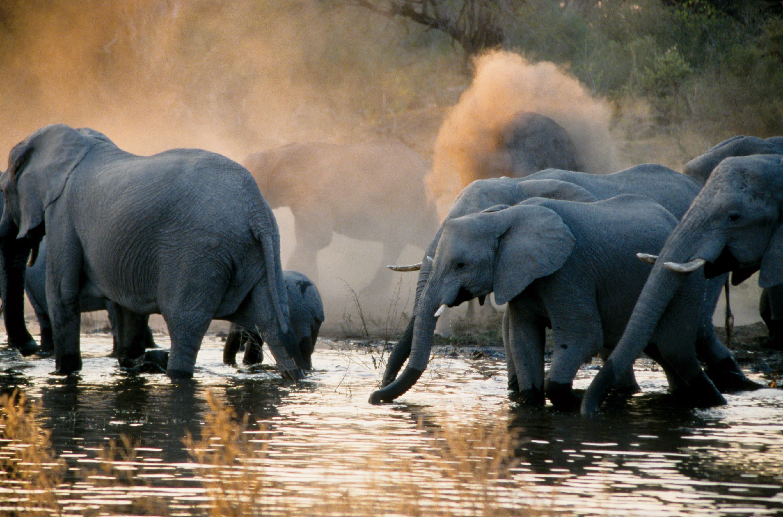 Experience Botswana 2