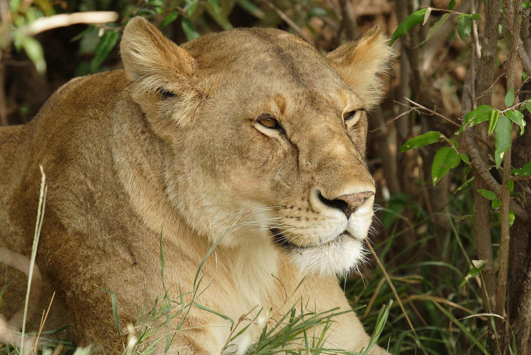 Serengeti & Ngorongoro Experience - Independent 3
