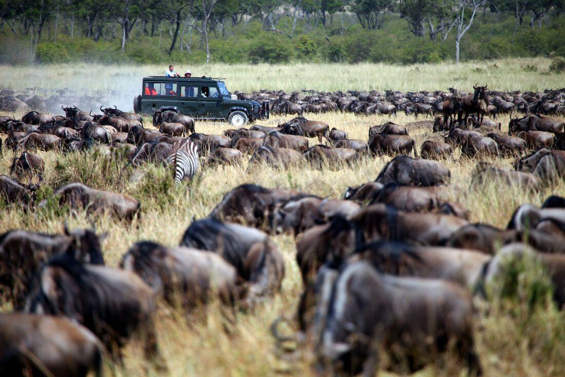 Masai Mara Experience - Independent 1