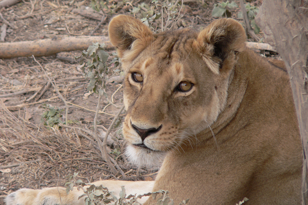 East Africa Discovery 3