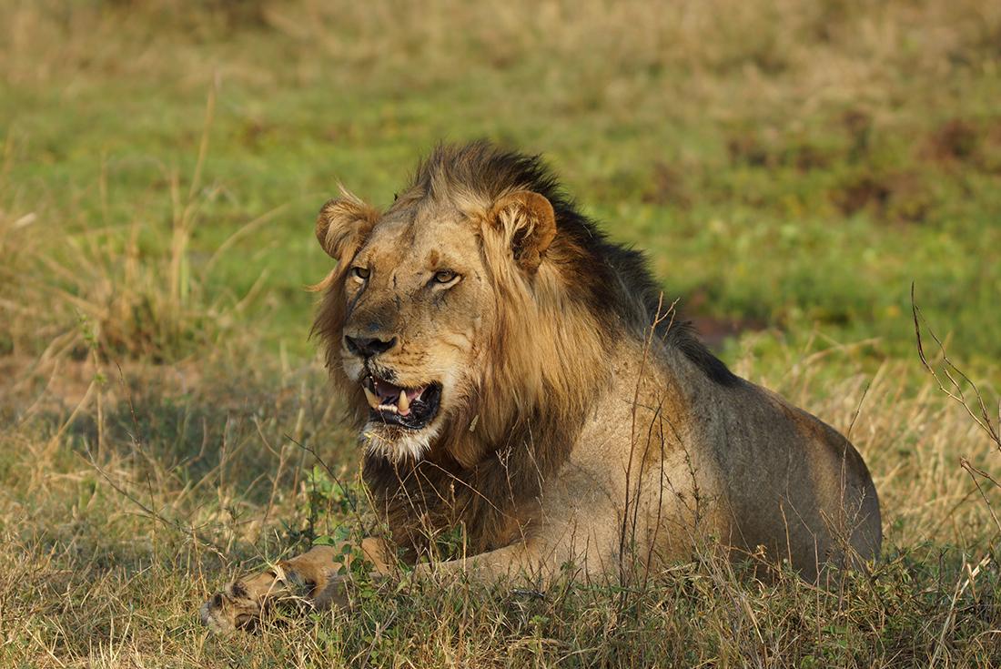 Lower Zambezi Experience: Independent 4