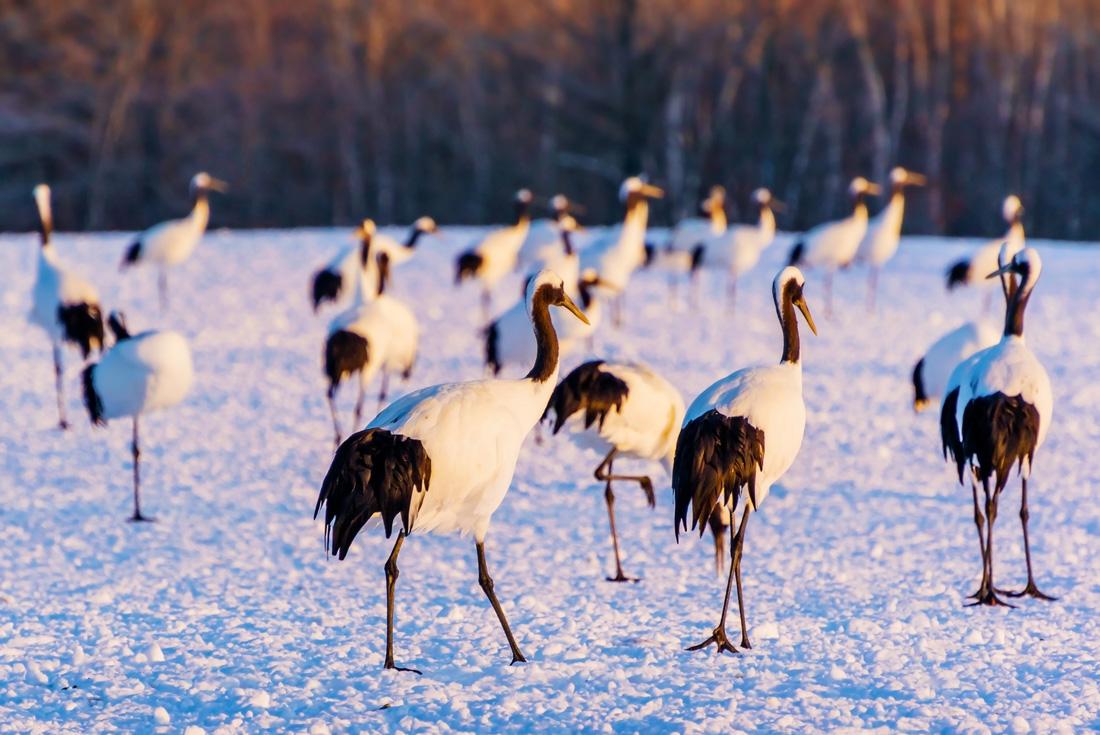 Hokkaido Winter Discovery 3