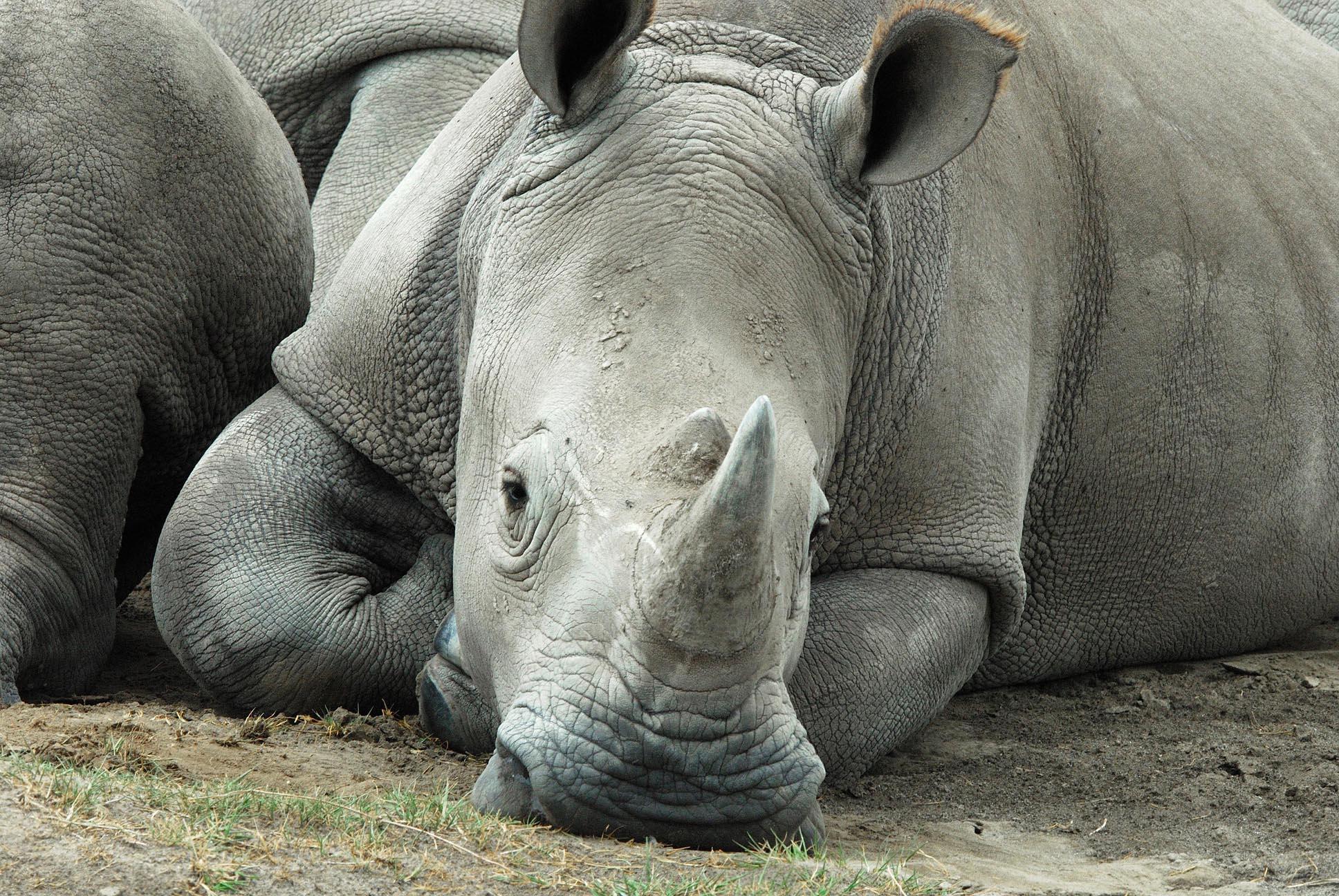 Classic Africa Safari 3