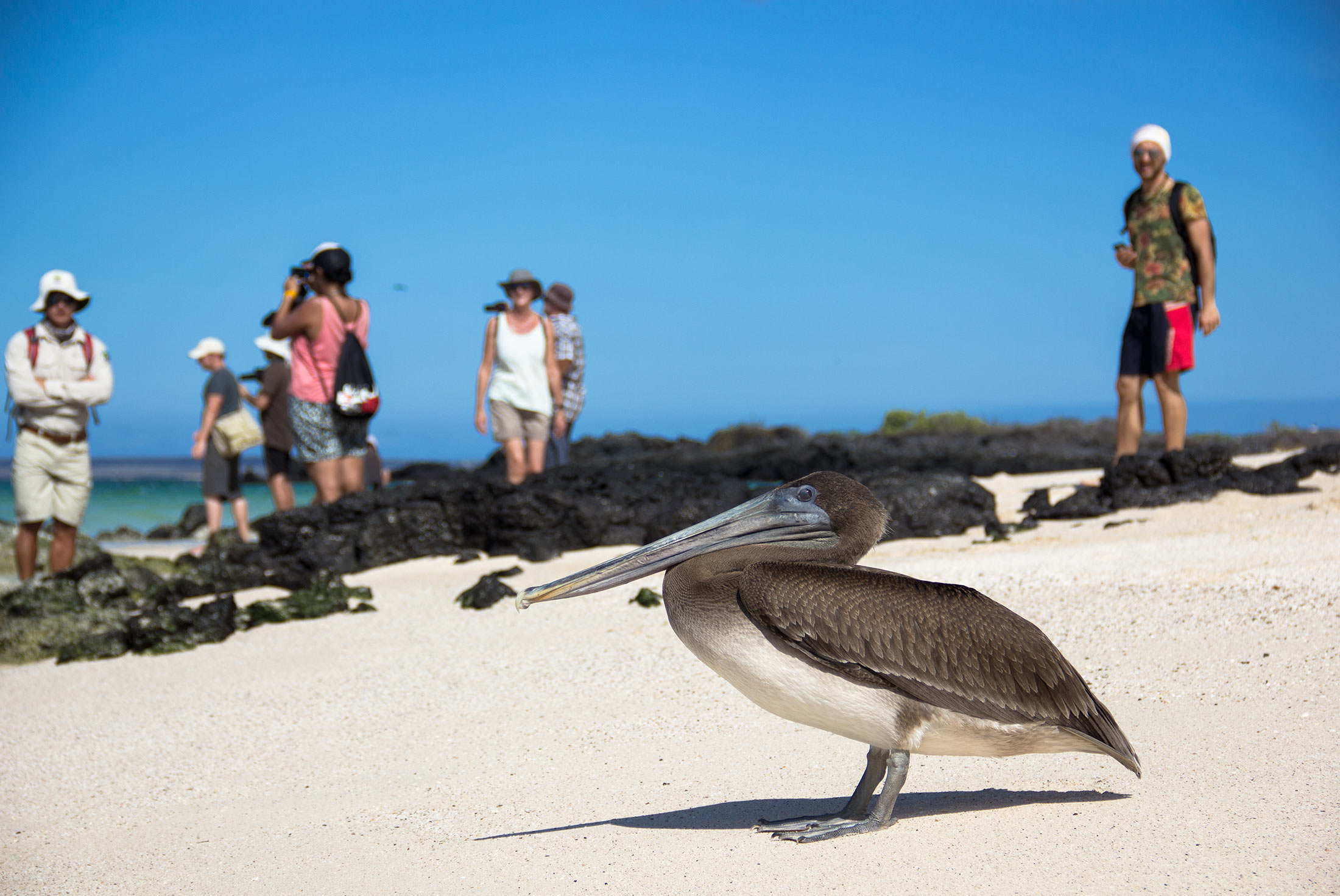 Galapagos Explorer: Central Islands (Grand Queen Beatriz) 3
