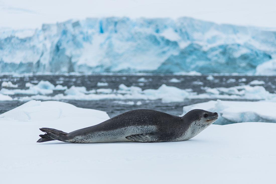 Best of Antarctica from Punta Arenas 1