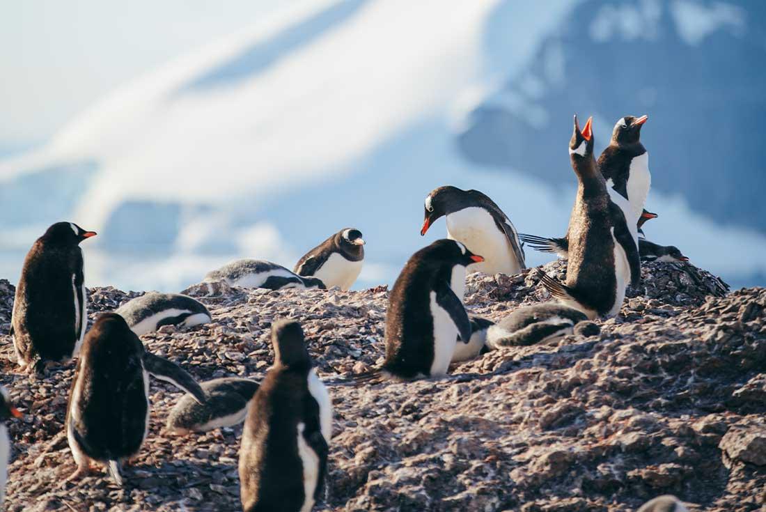 Highlights of South Georgia and the Antarctic Peninsula 2