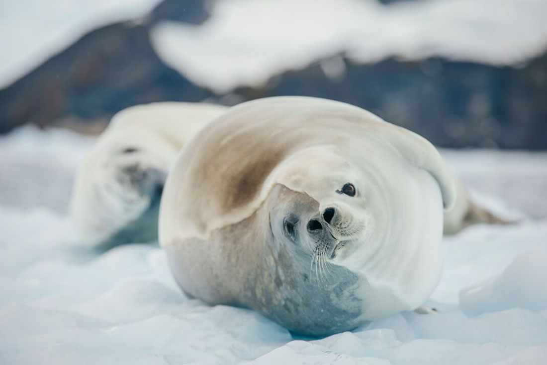 Highlights of South Georgia and the Antarctic Peninsula 4