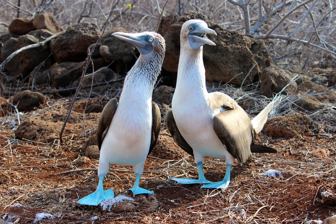 Ultimate Galapagos: Central Islands (Grand Daphne) 3