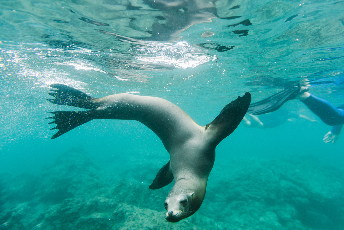 Ultimate Galapagos: Central Islands (Grand Daphne) 4