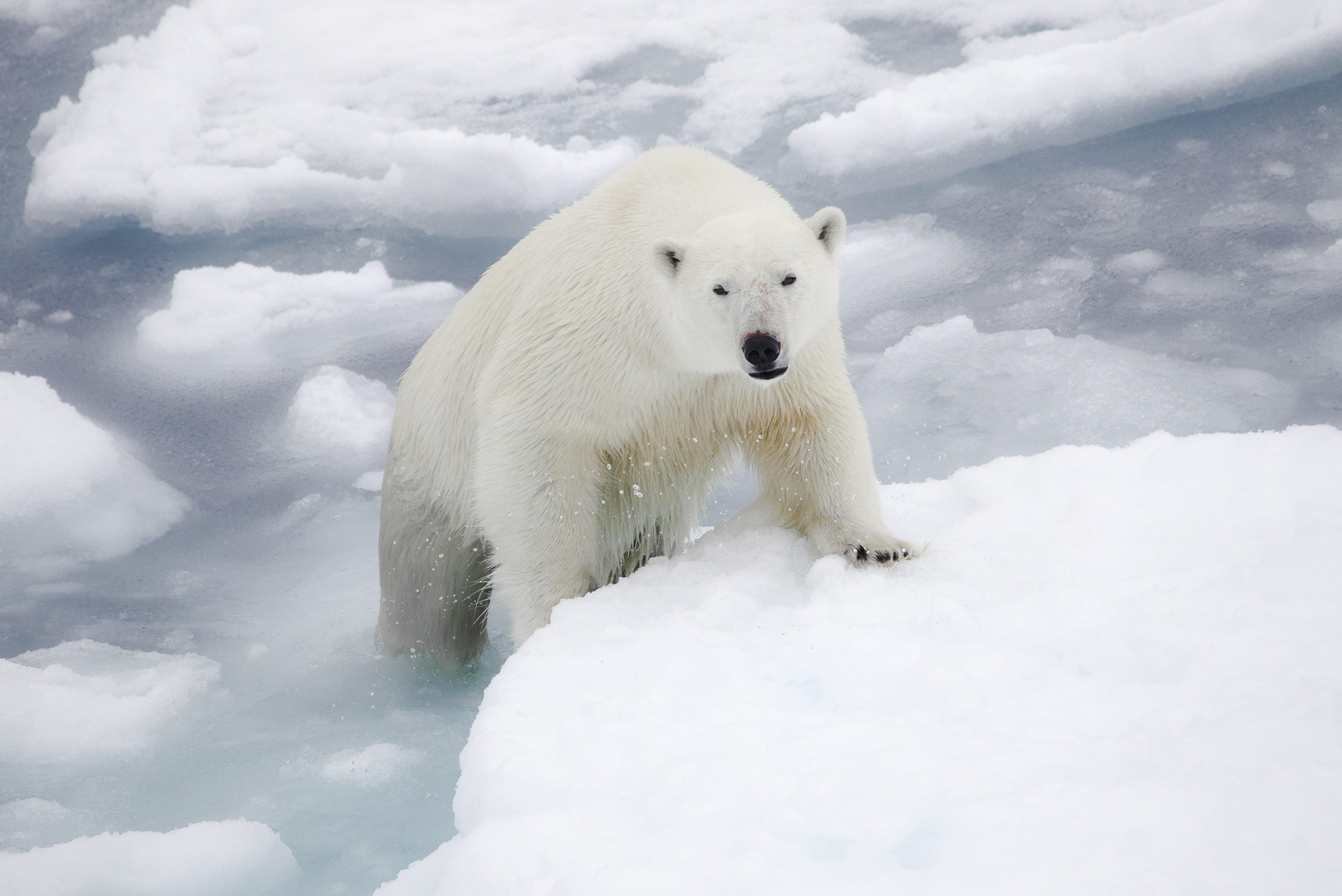 Introduction to Spitsbergen 4