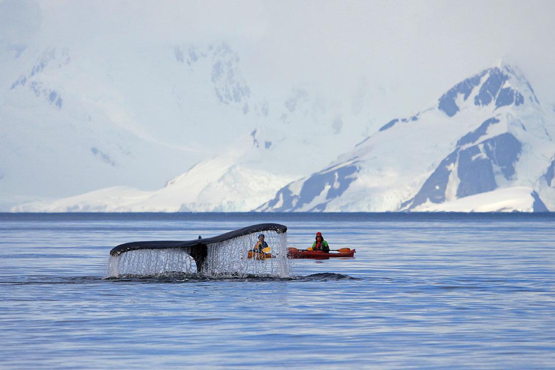 WWF Giants of Antarctica 1