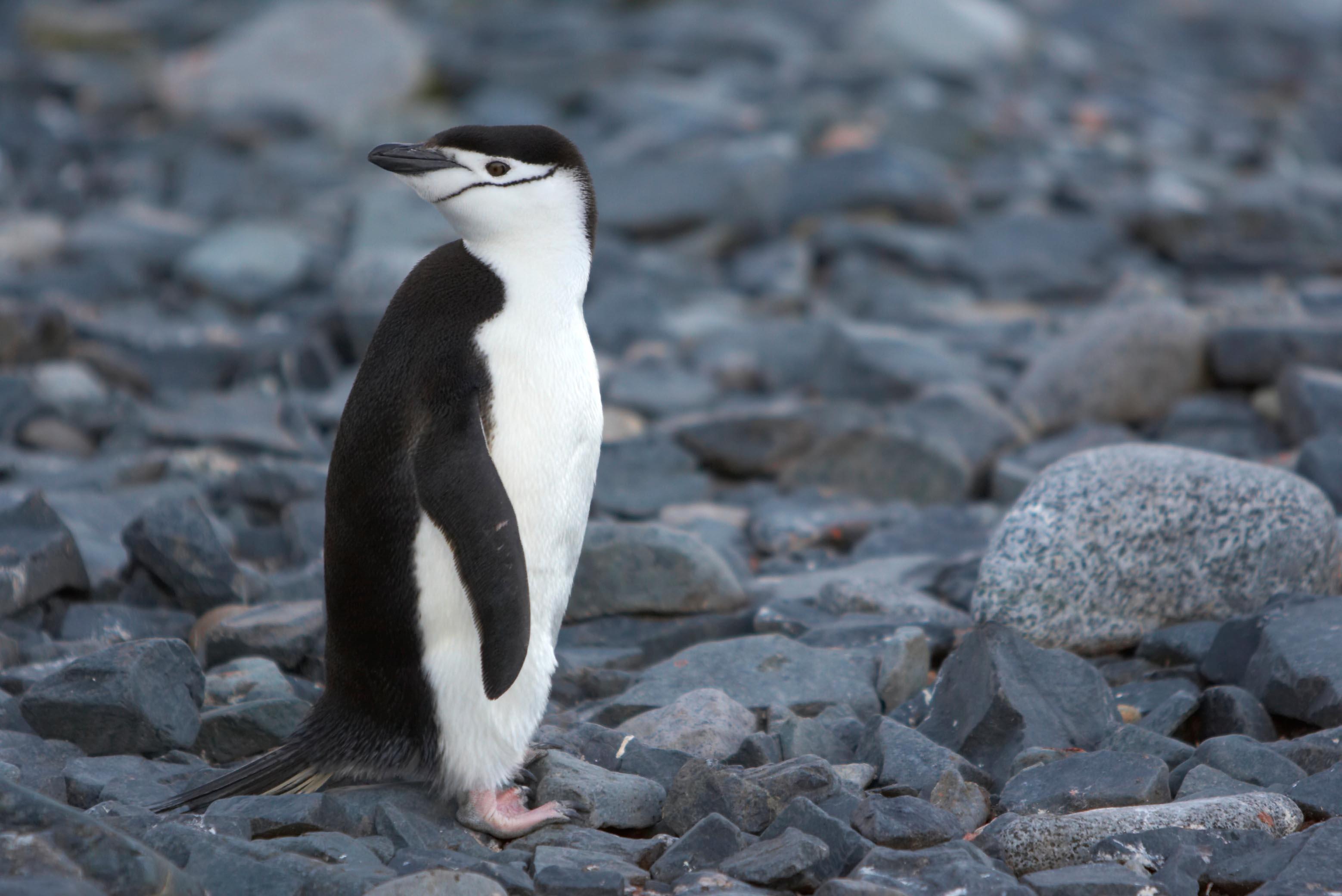 Antarctic Peninsula, Falkland Islands & South Georgia from Ushuaia 4