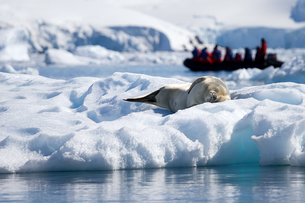 Antarctic Explorer: From Buenos Aires 11 days 1
