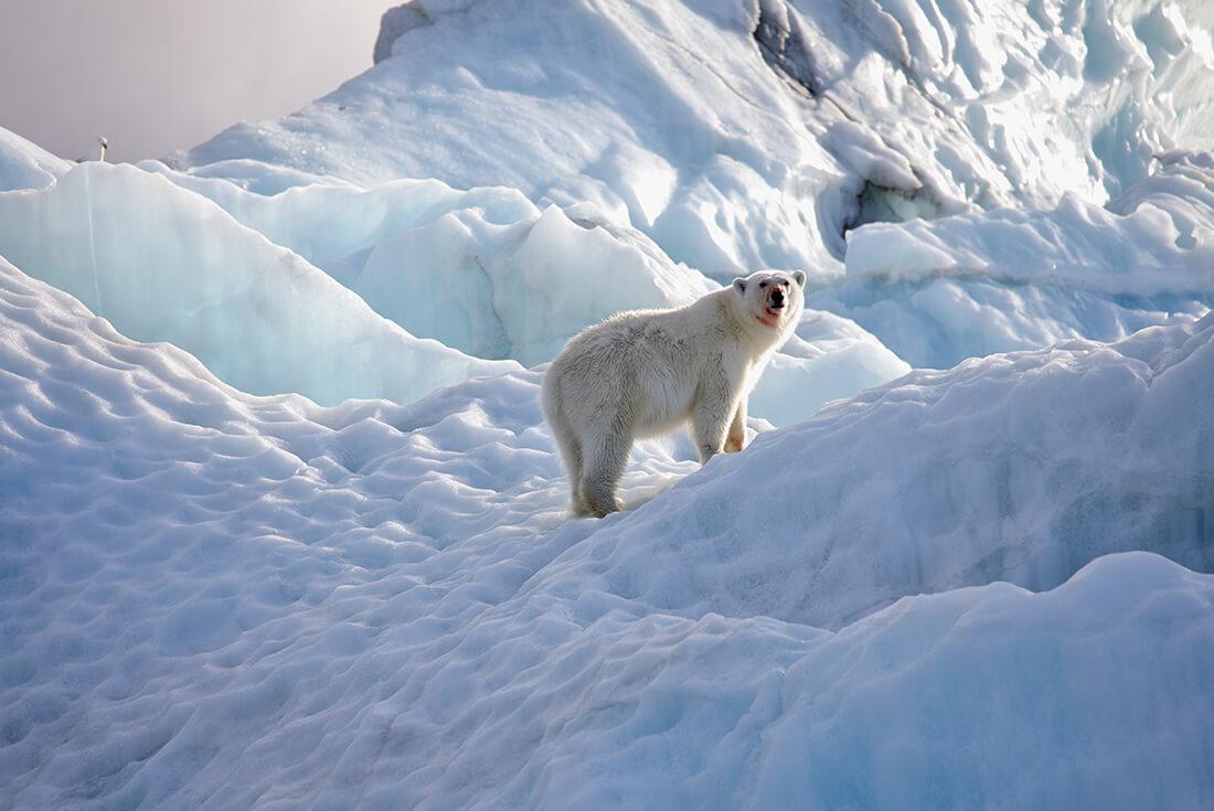 Jewels of the Russian Arctic: Franz Josef Land and Novaya Zemlya 1