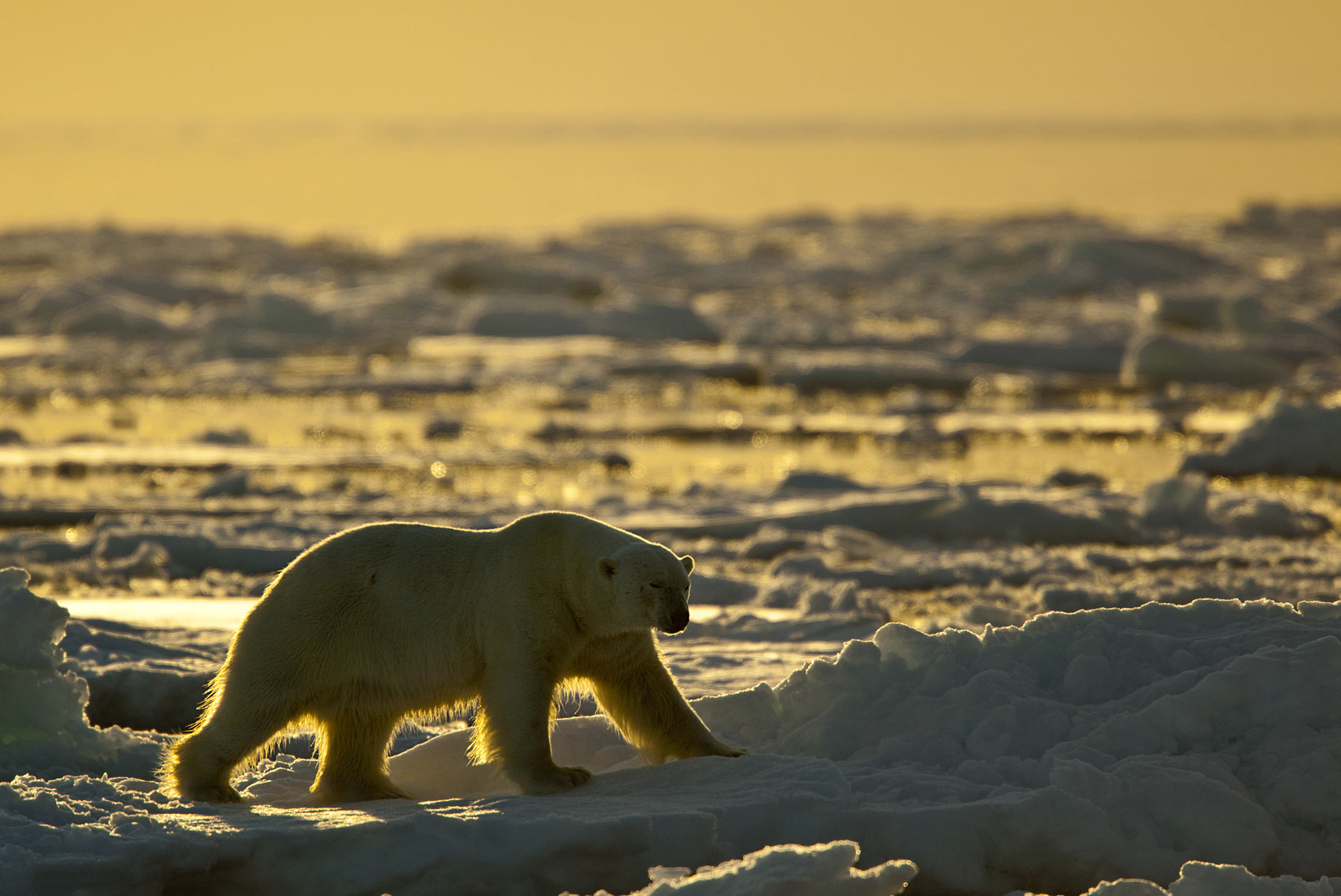 Essential Greenland: Southern Coasts & Disko Bay 4
