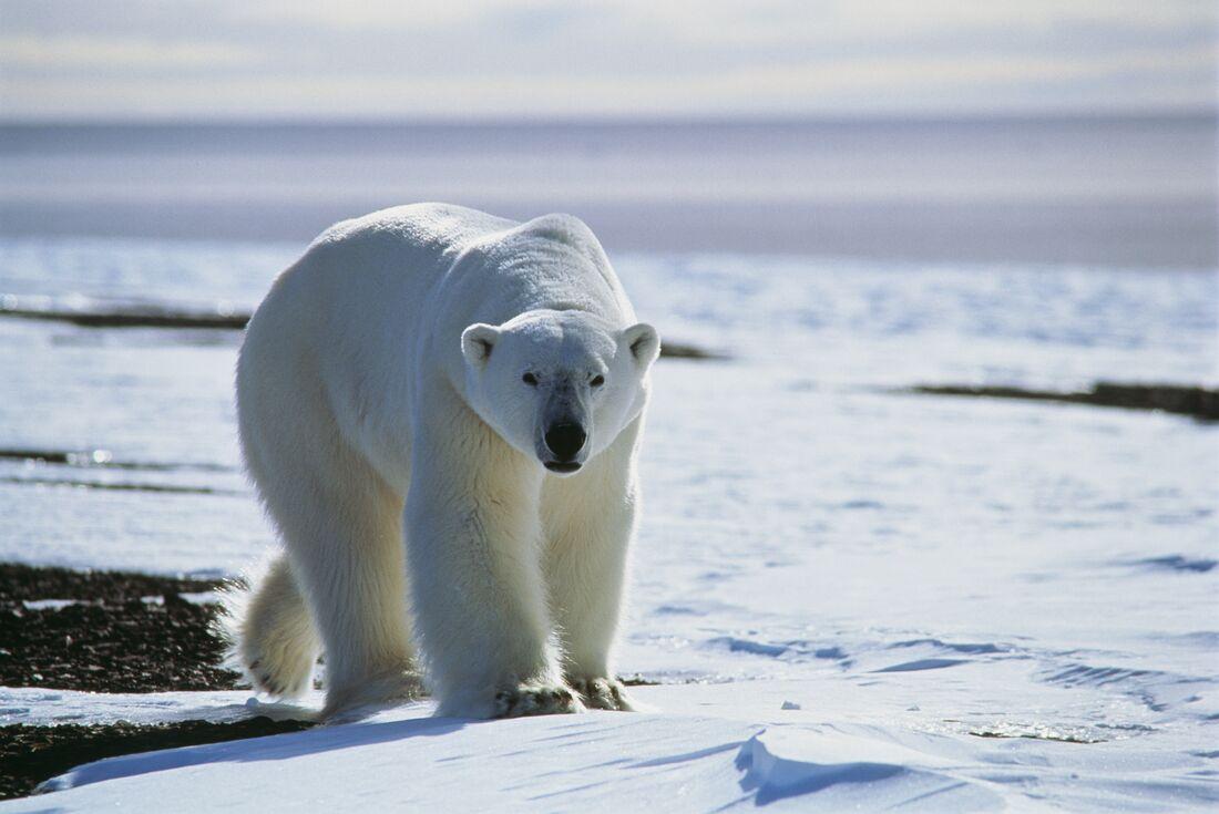 Northwest Passage: Epic High Arctic 4