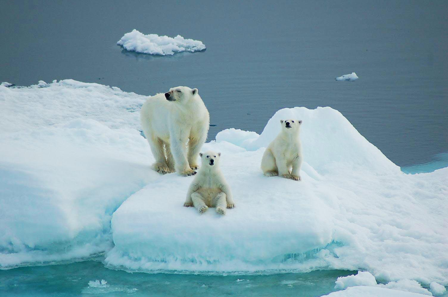 Spitsbergen Explorer 4
