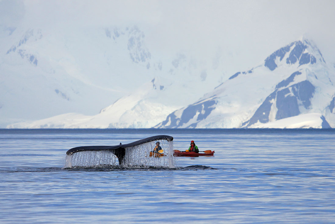 Uncharted Antarctica: East and West Peninsula 3